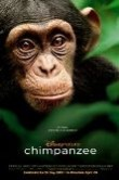 Chimpanzee official poster